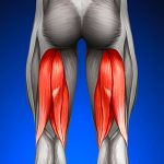 One-Exercise-Isn't-Enough-for-Hamstrings